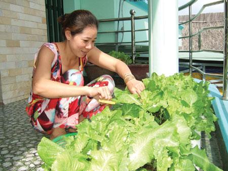 Người thành thị có thể áp dụng các kỹ thuật trồng cây rau xà lách sạch tại nhà